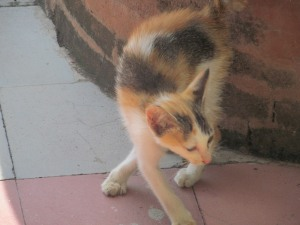 A very plaintive (and hungry) kitten who found me outside the museum at Kertha Gosa.